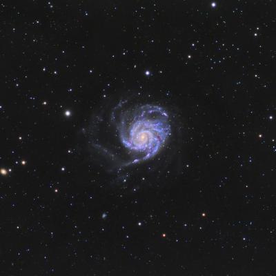 M101 web